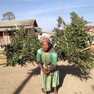 Old Ethiopian woman carrying plants